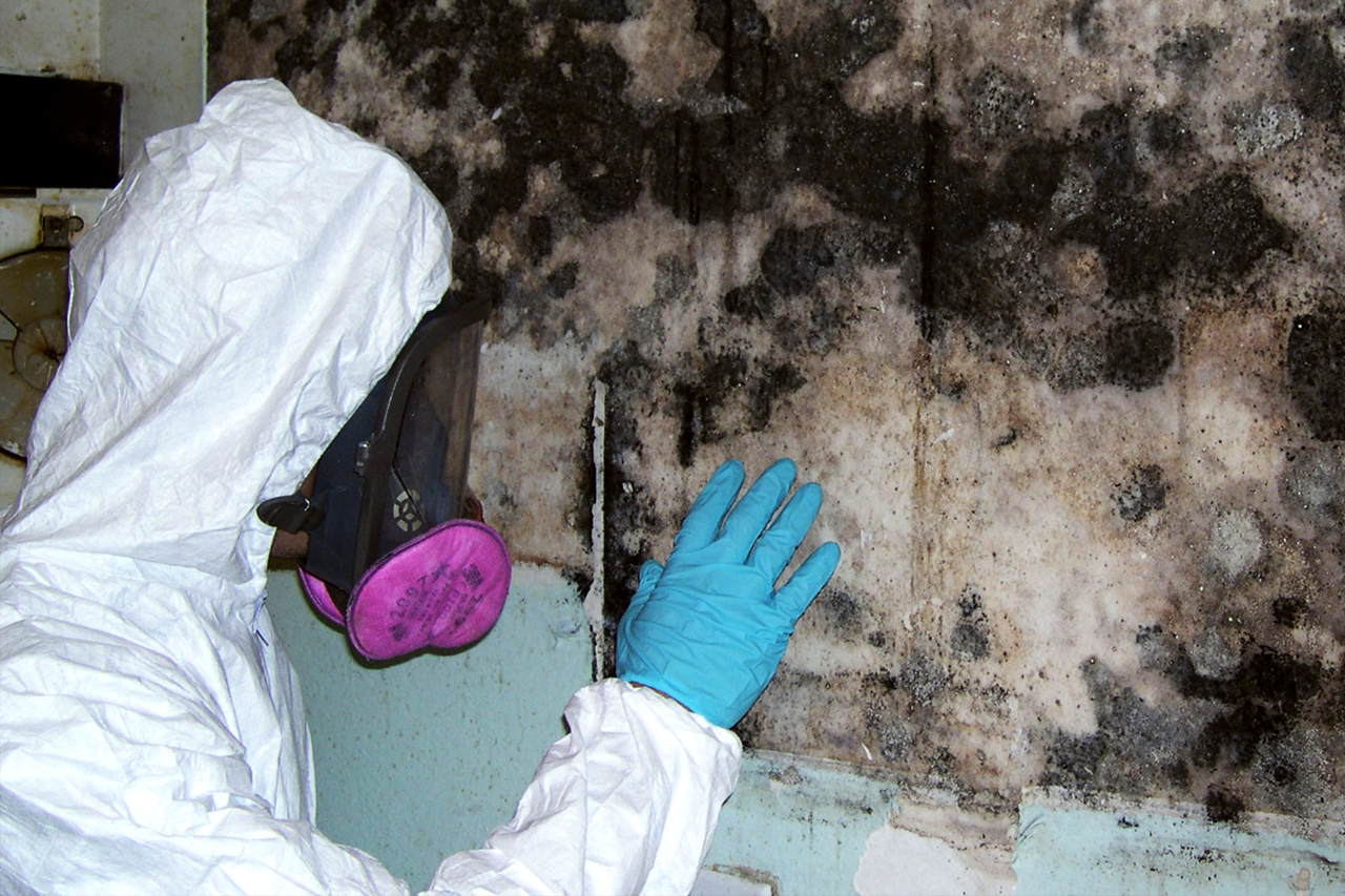Mold Remediation & Removal Uxbridge