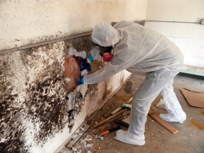 mold removal remidiation toronto gta emergency